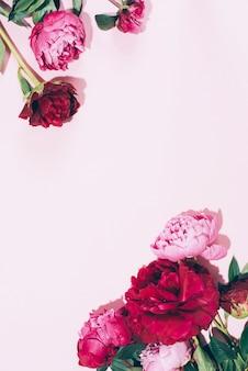 Hermosas flores de peonía rosa con sombra dura sobre fondo pastel