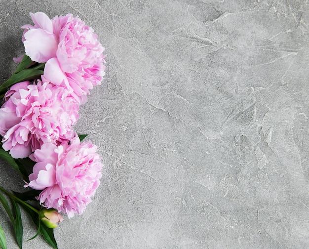 Hermosas flores de peonía rosa