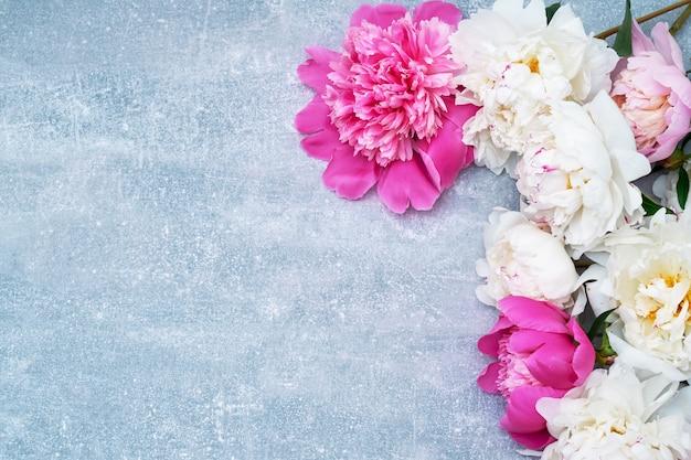 Hermosas flores de peonía sobre fondo gris.