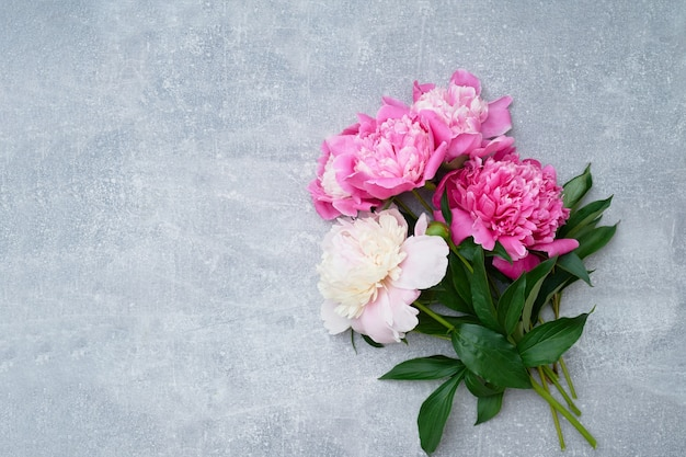 Hermosas flores de peonías rosas en gris.