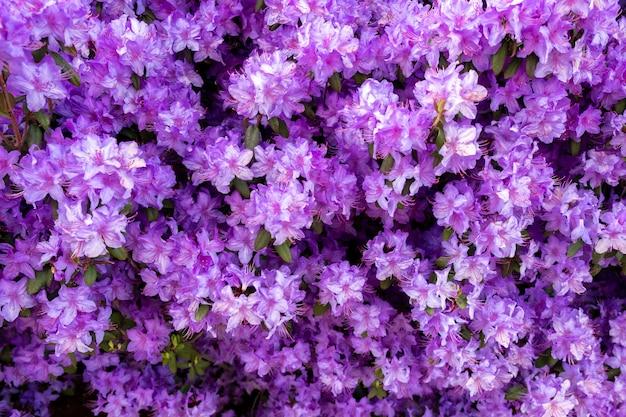 Hermosas flores pequeñas de color púrpura