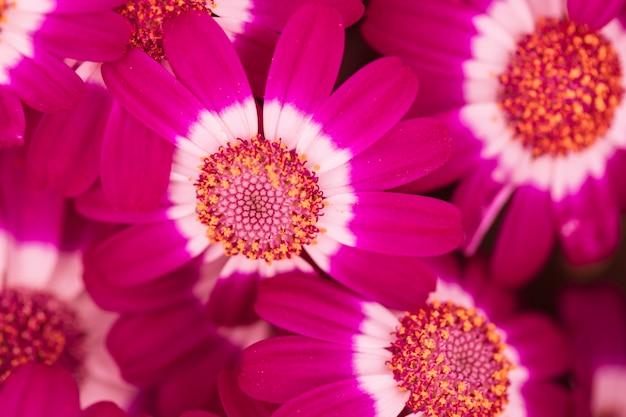 Hermosas flores púrpuras frescas
