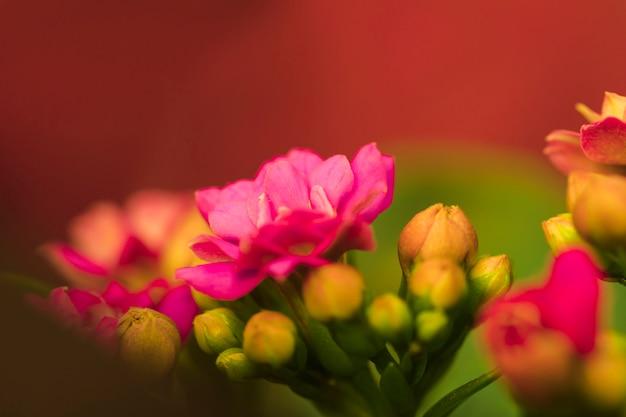 Hermosas flores rosas frescas
