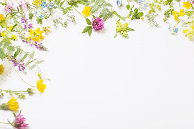Hermosas flores silvestres sobre fondo blanco.
