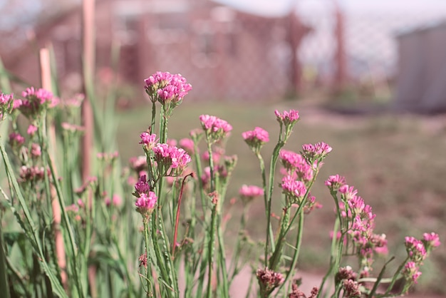 Hermosas flores sobre un fondo borroso.
