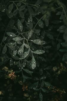 Hermosas gotitas en hojas de planta verde
