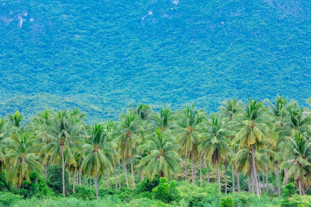 Hermosas granjas de árboles de coco y montañas en tailandia.