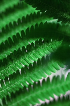 Hermosas hojas de helechos. fondo de helecho floral natural verde