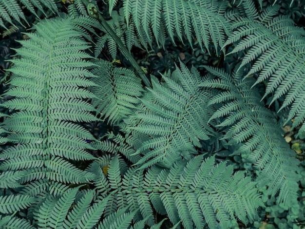 Hermosas hojas de helechos en fondo verde.