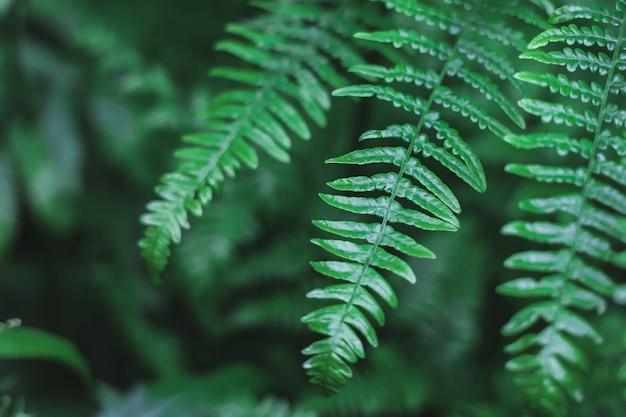 Hermosas hojas de helechos sobre fondo de follaje verde