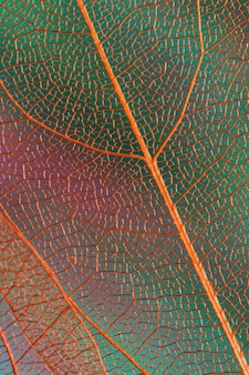 Hermosas hojas de otoño abstractas con venas naranjas
