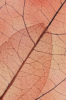 Hermosas hojas de otoño abstractas