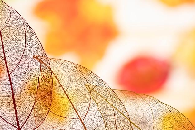 Hermosas hojas de otoño naranja transparente
