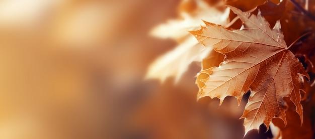 Hermosas hojas de otoño sobre fondo rojo de otoño soleado luz del día horizontal