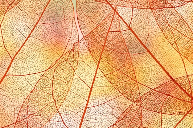 Hermosas hojas de otoño transparentes naranjas
