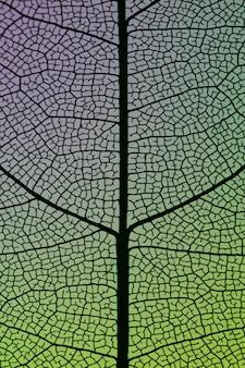 Hermosas hojas de otoño verdes abstractas