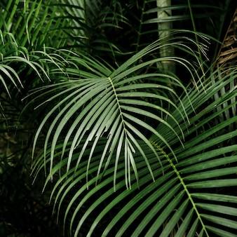 Hermosas hojas tropicales en el bosque