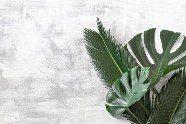 Hermosas hojas tropicales sobre un fondo blanco. banner de cartel, plantilla de tarjeta postal.