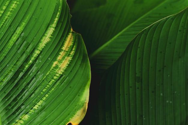 Hermosas hojas verdes