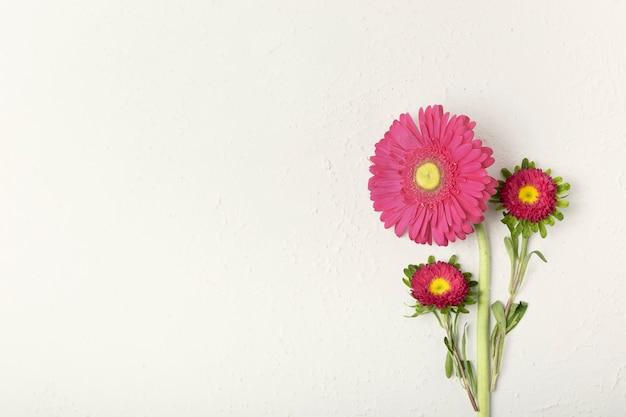 Hermosas margaritas florales con fondo blanco.