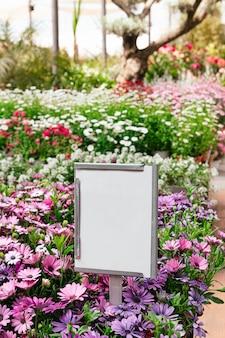 Hermosas margaritas púrpuras que florecen en el jardín durante la primavera con un cartel en blanco para maqueta