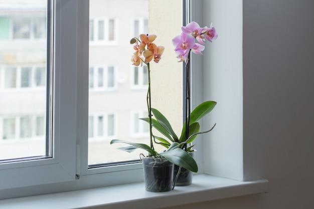 Hermosas orquídeas en el alféizar de la ventana