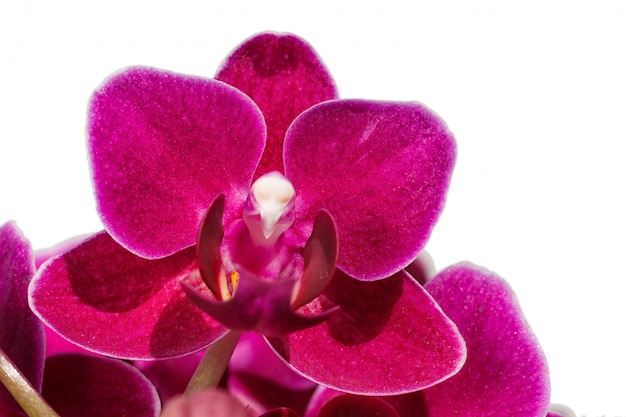 Hermosas orquídeas de diferentes colores.