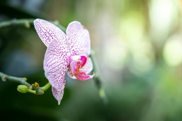 Hermosas orquídeas en flor en el bosque
