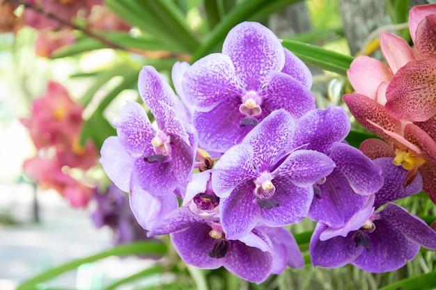 Hermosas orquídeas florecen en el jardín.