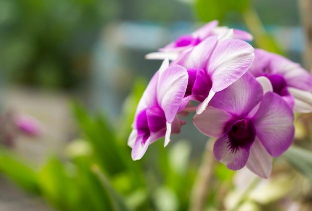 Hermosas orquídeas moradas con enfoque seleccionado.