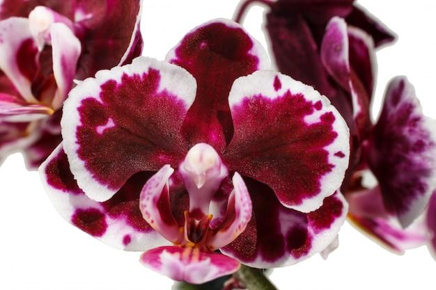 Hermosas orquideas moradas