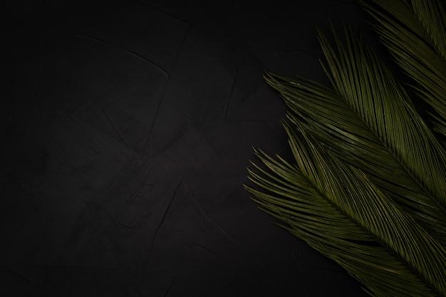 Hermosas palmeras en negro con copyspace