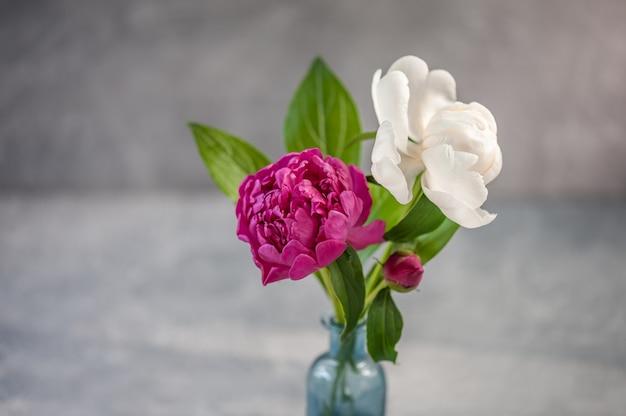 Hermosas peonías en florero. día internacional de la mujer, cumpleaños, concepto del día de la madre.