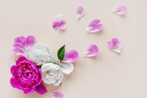 Hermosas peonías rosas y pétalos sobre un fondo claro, vista superior