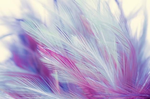Hermosas plumas de pollo en fondo de estilo suave y desenfocado