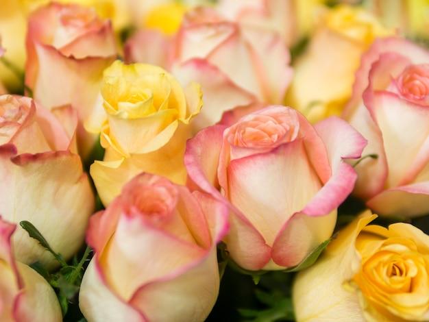 Hermosas rosas amarillas y rosadas naturales