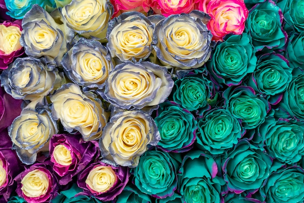 Hermosas rosas azules para boda y compromiso.