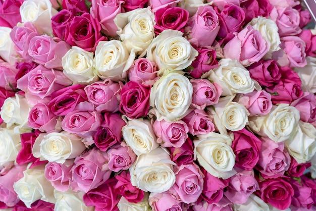Hermosas rosas blancas y rosadas. las rosas encajan unas con otras.
