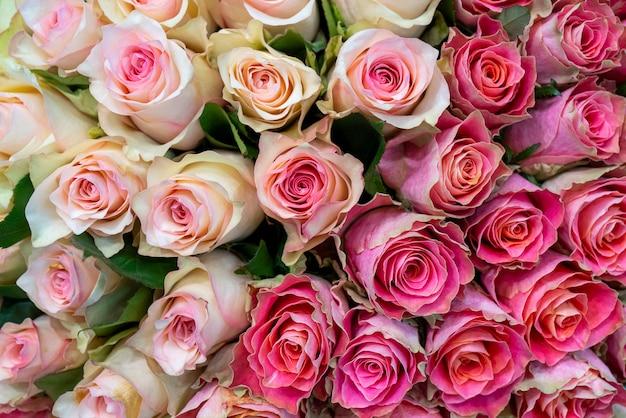 Hermosas rosas para boda y compromiso.