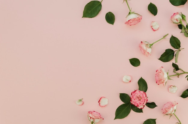 Hermosas rosas frescas con espacio de copia