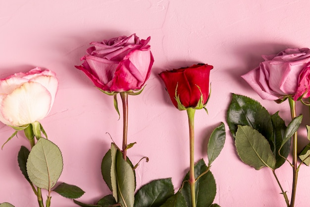 Hermosas rosas en plano