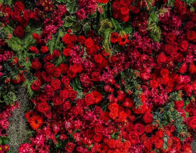 Hermosas rosas rojas frescas y diferentes tipos de flores rojas decoradas pared del jardín