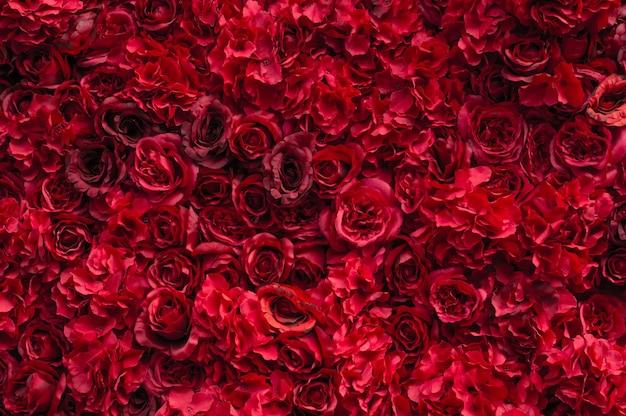 Hermosas rosas rojas. pared de flores. primer plano de enormes rosas rojas. día de san valentín presente. amor y pasión. diseño floral.