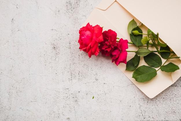 Hermosas rosas rojas en el sobre abierto sobre fondo blanco grunge