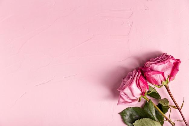 Hermosas rosas rosadas con espacio de copia