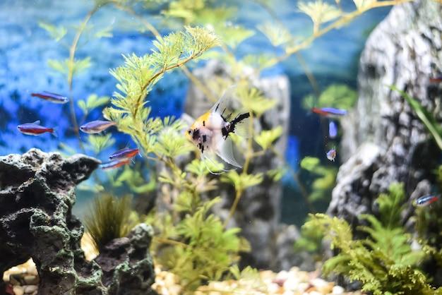 Hermoso acuario lleno de peces