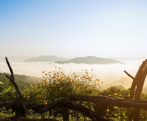 Hermoso amanecer con mar de niebla sobre el río con primer plano de girasol mexicano salvaje