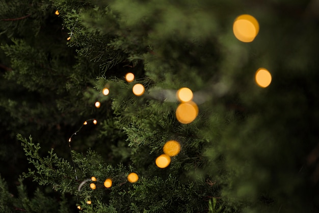 Hermoso árbol y luces para el concepto de navidad