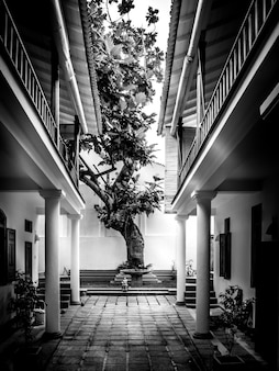 Un hermoso árbol en un patio trasero.