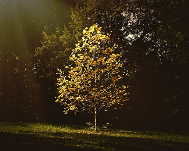 Hermoso árbol pequeño con hojas de otoño que crecen en el parque bajo la luz del sol